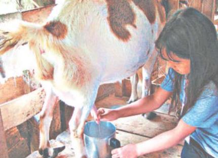 Evento sobre diagnóstico de brucelose animal é promovido pela UFSM e Secretaria da Agricultura e Pecuária