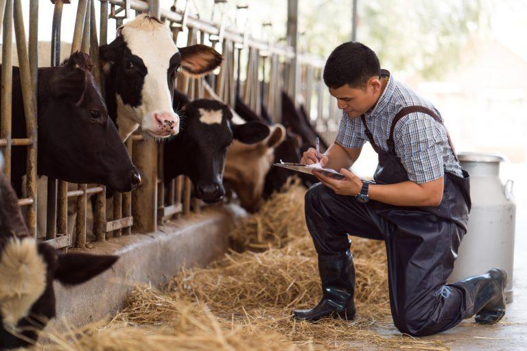 Indenizações a produtores de leite crescem em 2018