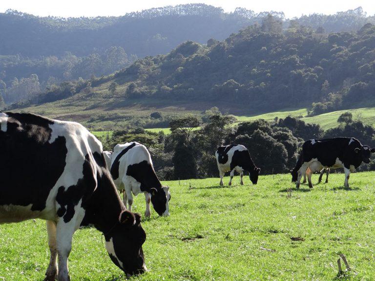 Sindilat participa de discussão sobre a cadeia produtiva do leite de Serafina Corrêa