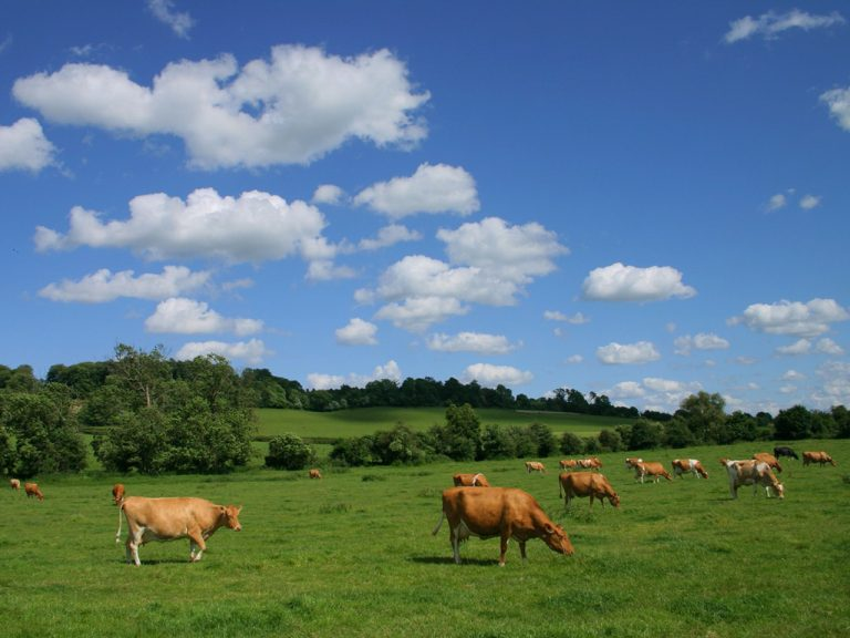 Indenizações do Fundesa somam R$ 1,7 mi para o setor leiteiro no 3º trimestre
